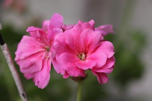 Flower, Plant, Nature, Macro, Red, Garden, Beautiful