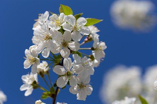 Bleed, Bee, Insect, Pollen, Honey Bee, Flower, Spring