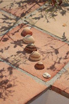 Hiszpania, Muszla, Lato, Spain, Shells, Summer, Nature