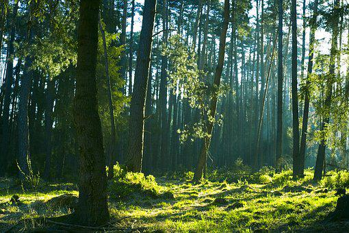 Forest, Beautiful, Morning, Tree, Nature, Landscape