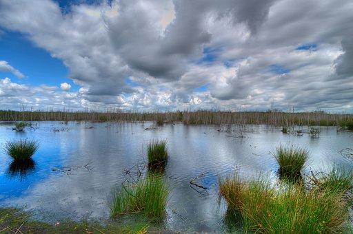 Moor, Nature Park, Birch, Dead Plant, Pond, Water