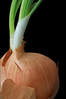 Onion, Engine, Growth, Sprout, Nature, Seedling