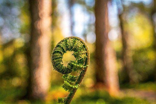 Fern, Unroll, Green, Forest, Nature, Growth, Unfold