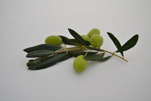 Oil, Ingredient, Natural, Ingredients, Food, Olive