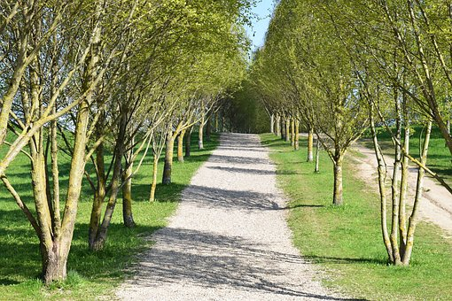 Alley, Garden, Nature, Park, Green, Tree, Plants