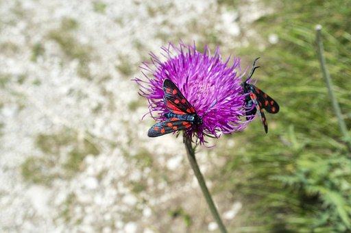 Butterflies, Flower, Polka Dots, Insect, Butterfly