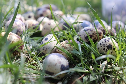 Quail, Egg, Quail Eggs, Easter, Close, Basket, Healthy
