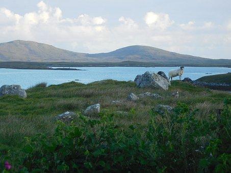 North Uist, Sheep, Loch, Scotland, Scottish, Highlands