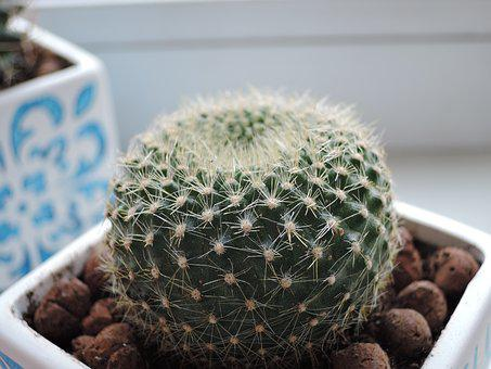 Cactus, Round, Scratchy, Green, Plant
