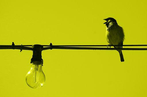 Sparrow, Line, Cable, Light Bulb, Bird