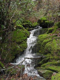 Waterfall, Forest, Nature, Stream, Water, Creek