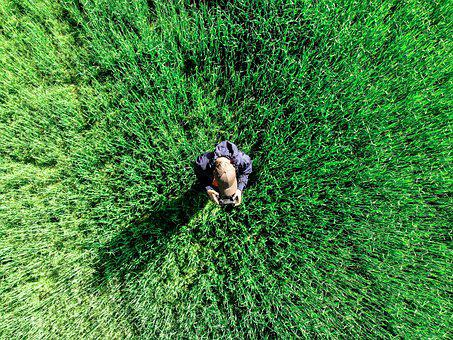 From The Top, Drone, Aerial View, In Flight, Field