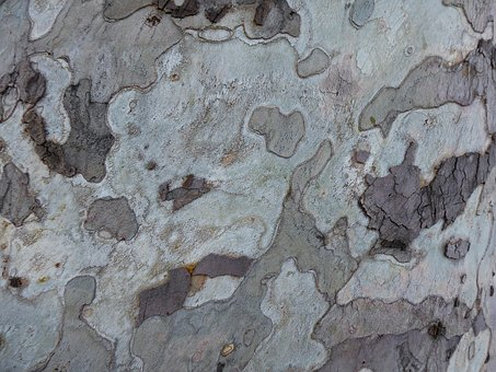 Background, Texture, Pattern, Bark, Tree, Structure