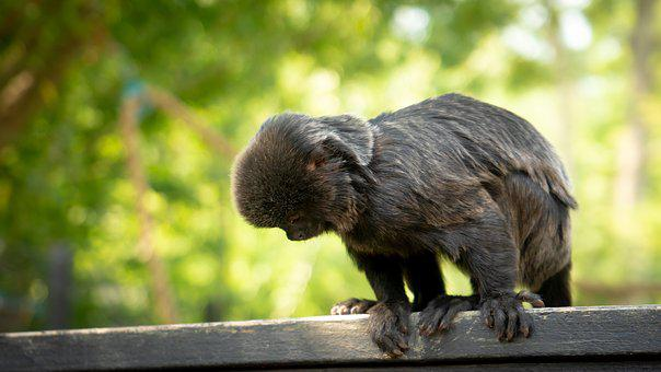 äffchen, Monkey, Animal World, Animal, Zoo, Cute, Sweet