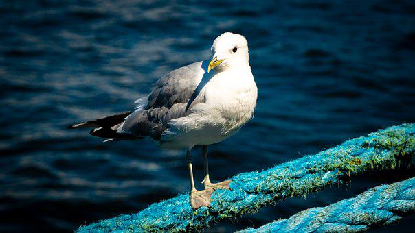 Seagull, Dew, Rope, Anchorage, Port, Lake, Water