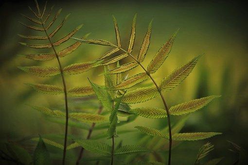 Green, Foliage, Garden, Plants, Eco, Botany, Plant