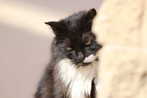 Animals, Cat, Portrait, Closeup, Expression, Thought