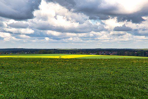 Field, Fodder Plant, Field Of Rapeseeds, Sky, Clouds