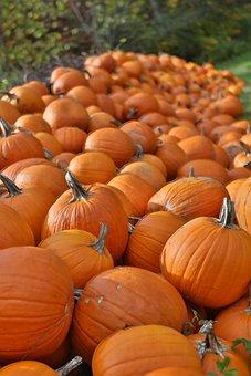 Pumpkins, Autumn, Vegetables, Thanksgiving, Food