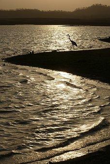Sun, Bird, Sunset, Orange, Silhouette, Earth, Freedom