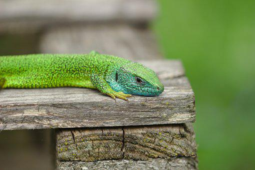 Grasshopper, Green, Almost, Animals, Creature