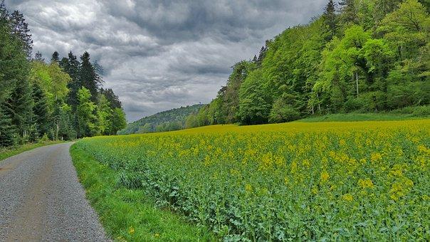 Landscape, Switzerland, Field Of Rapeseeds, Away, Trees