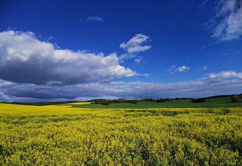 Landscape, Oilseed Rape, Spacious, Summer, Sky, Clouds
