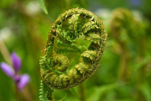 Plant, Fern, Nature, Green, Leaf, Forest, Summer, Flora