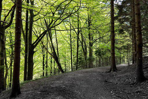 Forest, Trees, Nature, Landscape, Path, Light, Scenic