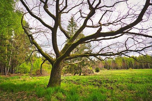 Moor, Marsh, Swamp, Landscape, Moorland, Nature Reserve