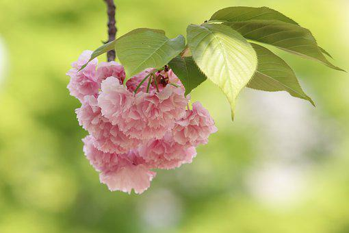 Spring, Bud, Nature, Green, Plants, The Leaves, Fresh
