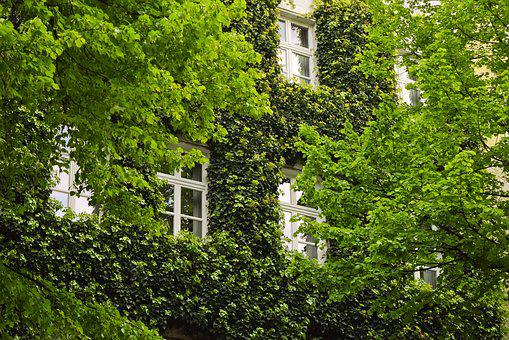 Plant, Ivy, Climber Plant, Nature, Green, Entwine