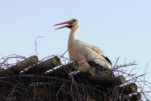 Stork, White, Bird, Nature, Feather, Water, Fauna