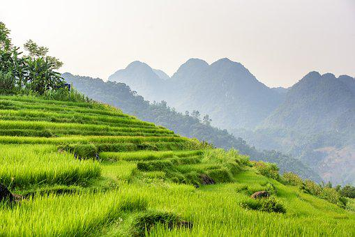 Pu Luong Nature Reserve In Vietnam, Agriculture