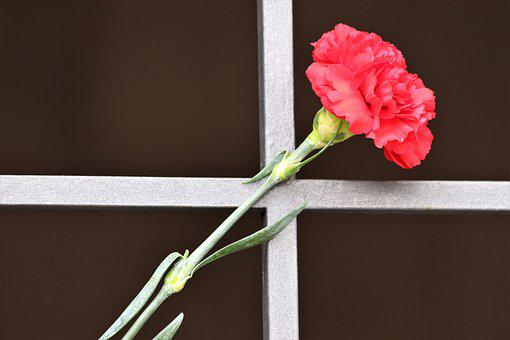 Red Carnation, Metal Grid, Tomb Entrance, Condolence
