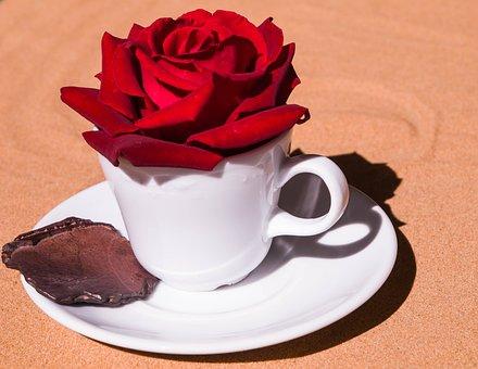 Rose, Cup, Romantic, Coffee