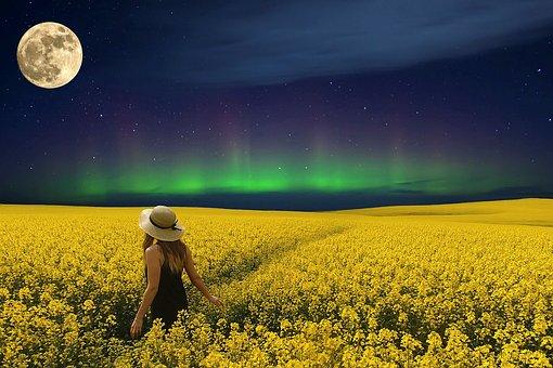 Field, Sunflower, Sky, Star, Moon, North Pole Lights