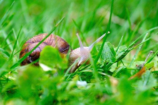 Snail, Crawl, Shell, Creature, Reptile