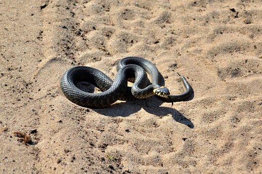 Really, Snake, Summer, Sand, Poison, Biology, Fear