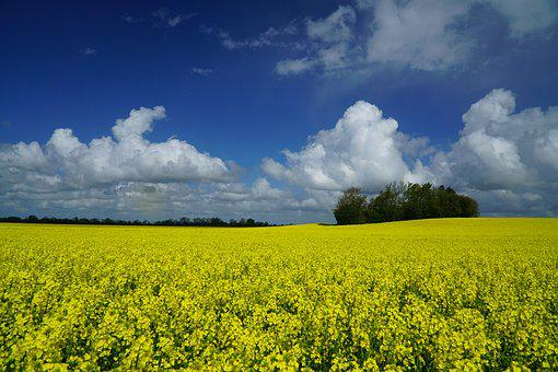 Spring, Oilseed Rape, Field Of Rapeseeds, Sky, Clouds