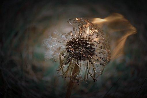 Fire, Flower, Fairy, Nature, Bloom, Summer, Birthday