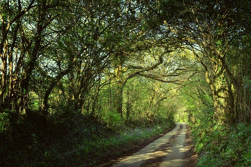 Away, Avenue, Forest, Passage, Cornwall, England, Trees