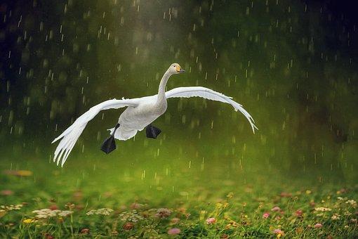 Rain, Wild, Nature, Wet, Green, Animal, Landscape
