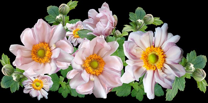 Anemone, Flowers, Arrangement, Garden, Nature