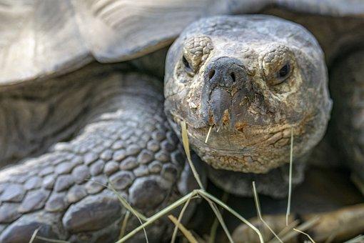 Poroszlo, Tisza-lake ökocentrum, Tortoise, Animal