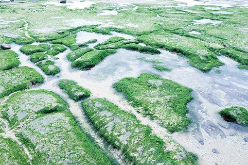 Beach, Aquatic Plants, Shallow, At Low Tide, Wetlands