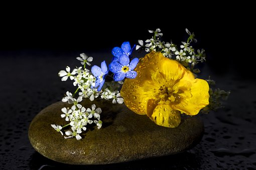Flowers, Still Lifes, Arrangement, Water, Bouquet