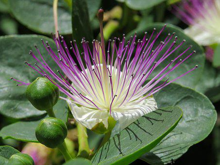 Plant, Blossom, Bloom, Fruit, Capture, Nectar, Exotic