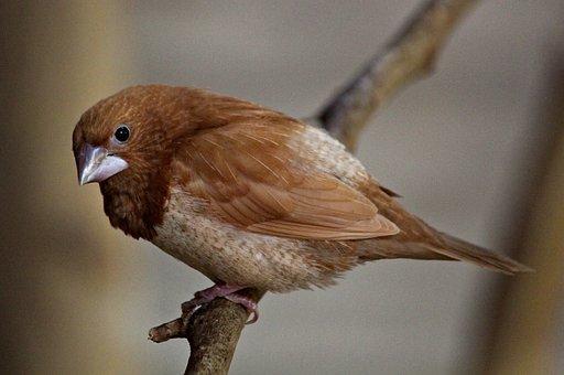 Sparrow, Bird, Animal, Feather, Beak, Branch, Close Up