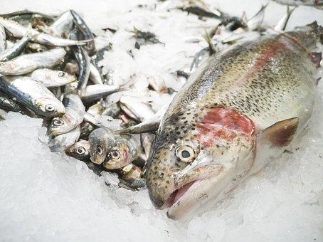 Fish, Market, Food, Diet, Cook, Gourmet, Healthy
